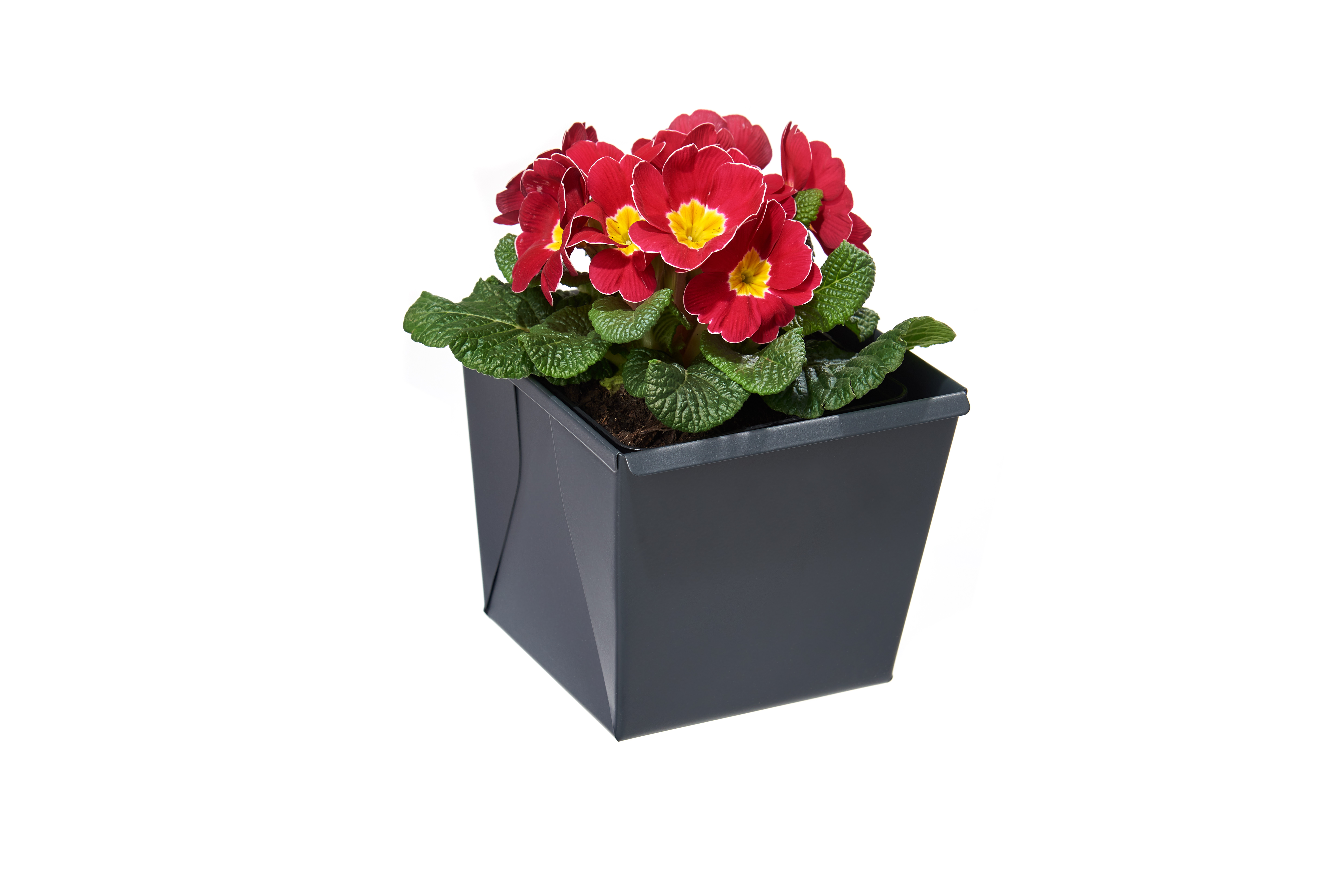 gabioka flowerbox small anthrazit pulverbeschichtet (RAL 7016 glatt matt)